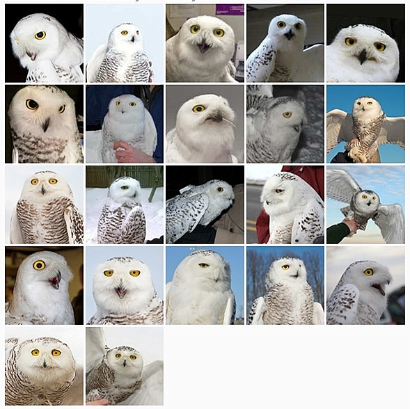 snowy owls class picture 2014